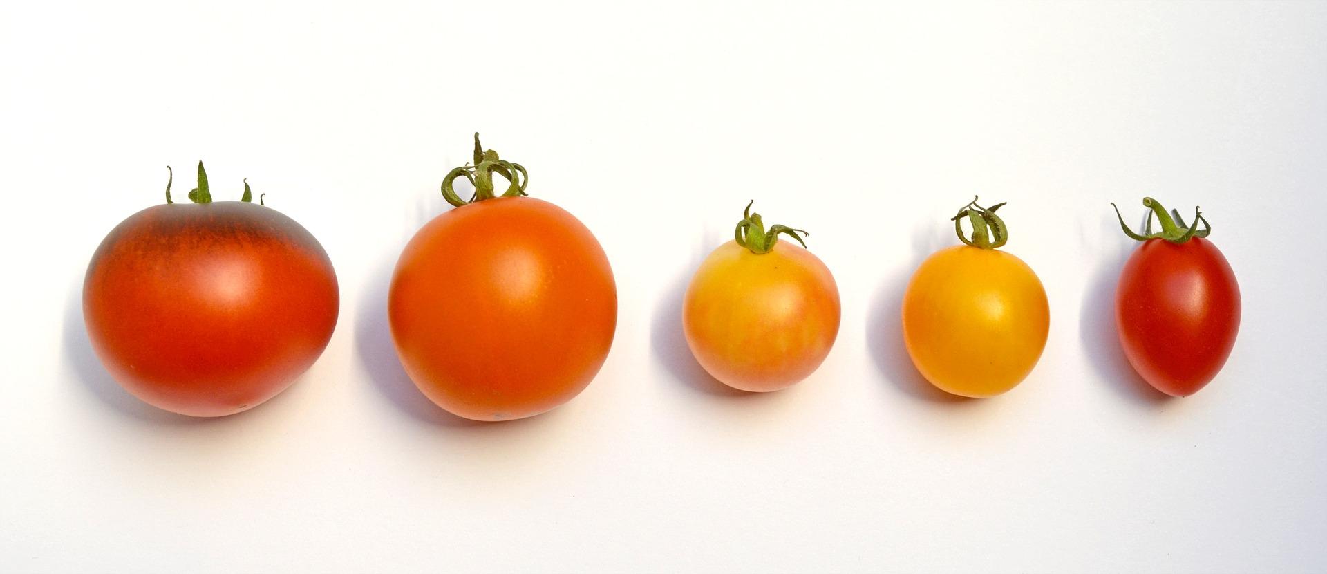 Pomidor pomidorowi nierówny – rodzaje pomidorów wykorzystywanych we włoskim menu