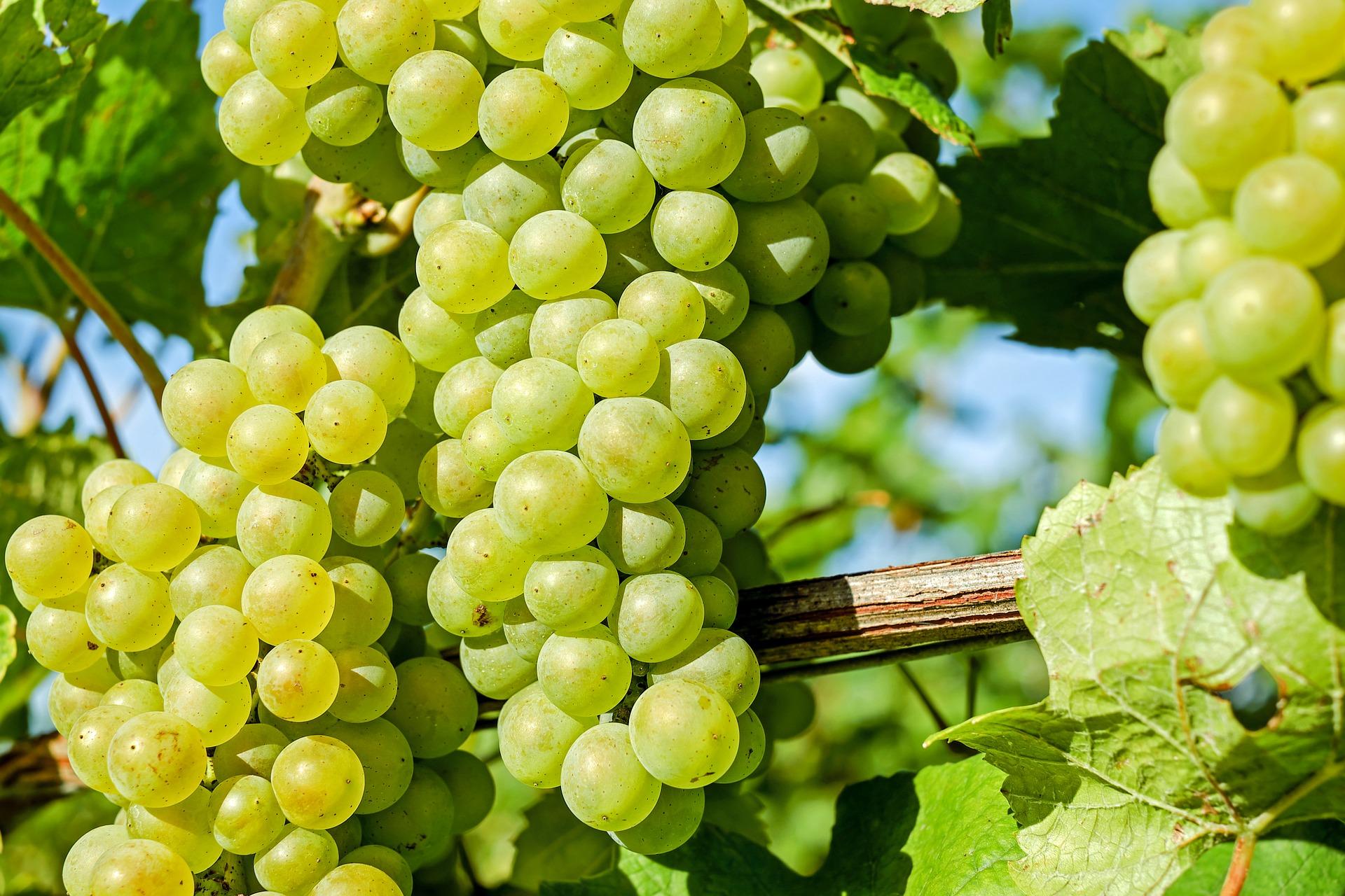 Po nich szybciej schudniesz i nie tylko – poznaj cudowną moc winogron