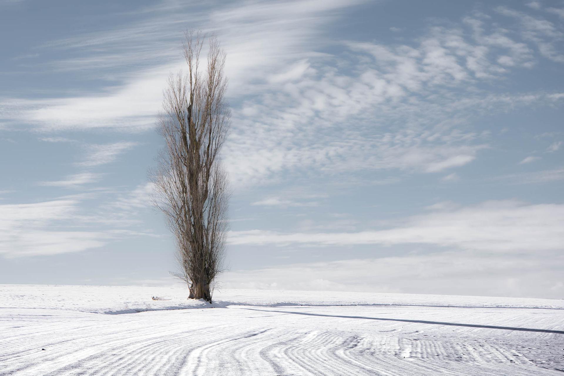 Topola – idealna na zimę