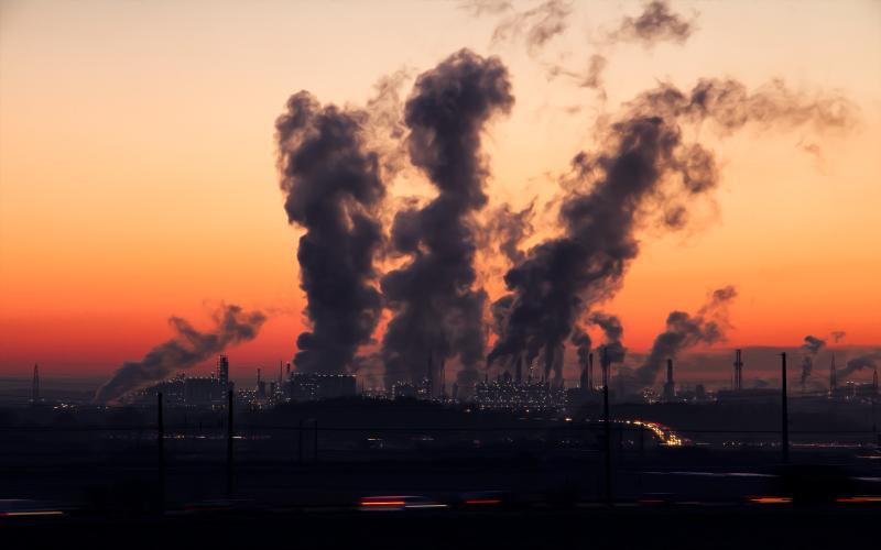 Walcz ze smogiem naturalnymi filtrami