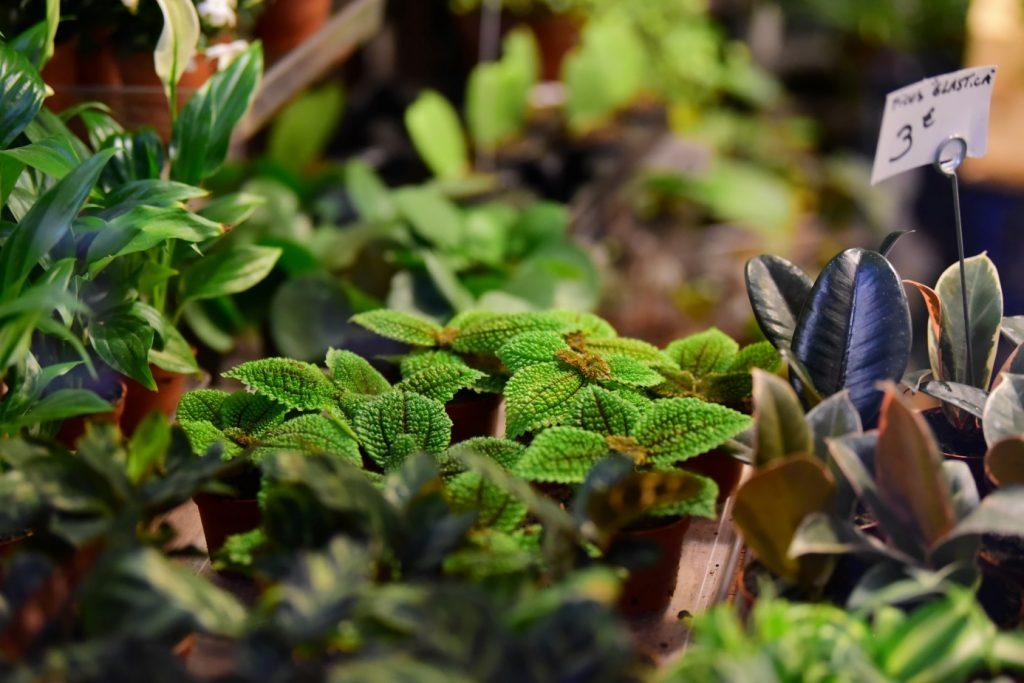 zioła w plastikowych doniczkach